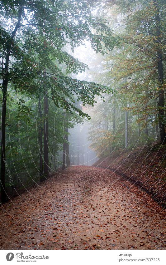 Ab durch die Mitte Lifestyle Freizeit & Hobby Tourismus Ausflug Abenteuer wandern Umwelt Natur Landschaft Schönes Wetter Nebel Wald Mischwald Wege & Pfade