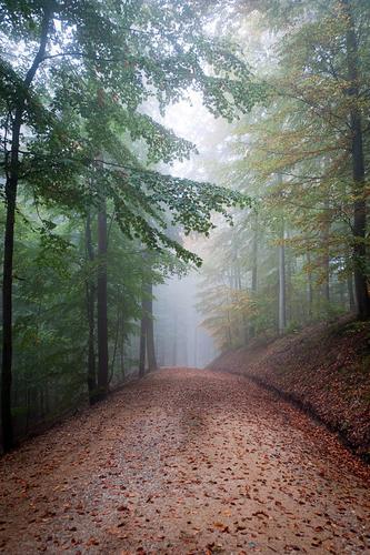Ab durch die Mitte Natur schön Landschaft Wald Umwelt Leben Wege & Pfade Stimmung Freizeit & Hobby Nebel Lifestyle Tourismus wandern Schönes Wetter Ausflug