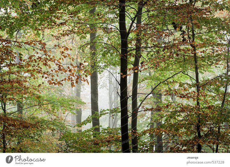Frischluft Natur schön Sommer Landschaft Blatt Wald Umwelt Leben Herbst Gesundheit Nebel frisch Ausflug Laubwald
