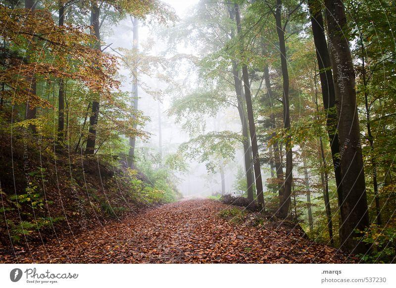 Ausweg Lifestyle Freizeit & Hobby Ausflug Abenteuer Umwelt Natur Landschaft Herbst Klimawandel Nebel Wald Blatt Laubwald Wege & Pfade Fußweg verblüht frisch