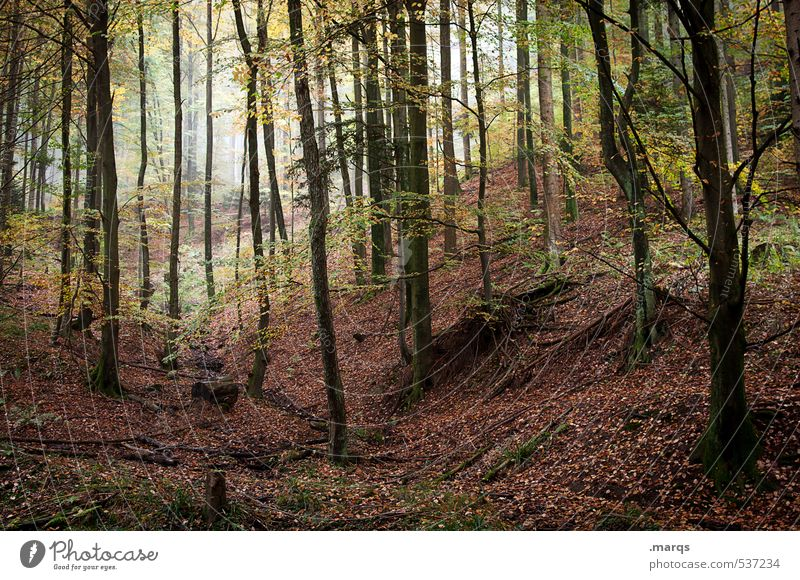 Verwildert Natur schön Landschaft Blatt Wald Umwelt Leben Herbst natürlich Stimmung Freizeit & Hobby Nebel Tourismus Wachstum wandern Ausflug