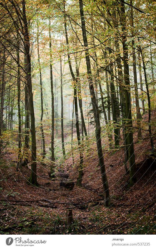 Wildwuchs Natur schön Landschaft Blatt Wald Umwelt Leben Herbst natürlich Stimmung Freizeit & Hobby Tourismus Wachstum Nebel hoch Ausflug