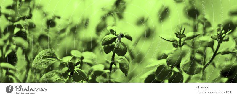 grün Blatt Pflanze Makroaufnahme Detailaufnahme Natur