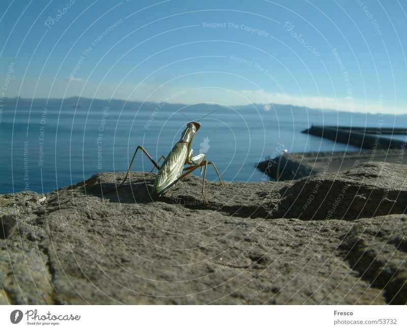 Freiheit Gottesanbeterin Tarifa Spanien Küste Meer Afrika Marokko gottesanbeter Wasser Hafen Berge u. Gebirge Provinz Tanger-Asilah