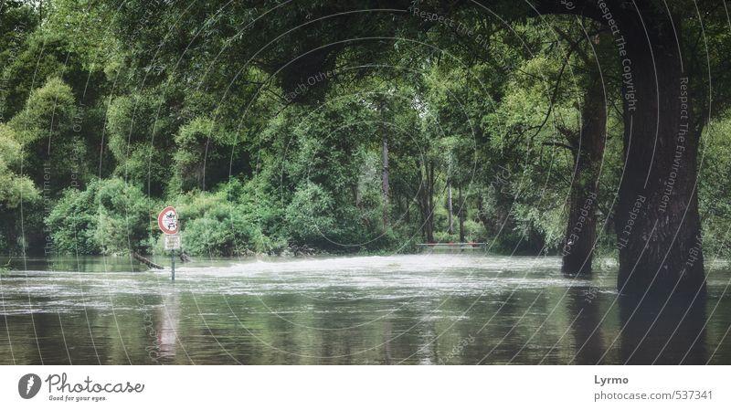 wildes Hochwasser Umwelt Natur Landschaft Pflanze Tier Wasser Klima Klimawandel Wetter schlechtes Wetter Unwetter Nebel Regen Baum Wald Flussufer