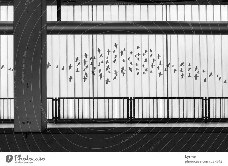 Zugvögel Stadt weiß schwarz Vogel Deutschland fliegen Fassade frei Europa Dekoration & Verzierung einfach Flügel Zeichen Unendlichkeit Bauwerk Verkehrswege