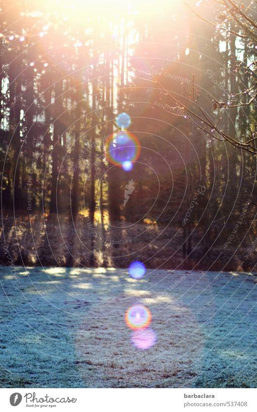 Punktsieg | Sonnenkraft gegen Schnee und Eis Natur Farbe Landschaft Winter Wald kalt Umwelt Wärme Wiese hell Stimmung Kraft leuchten Klima