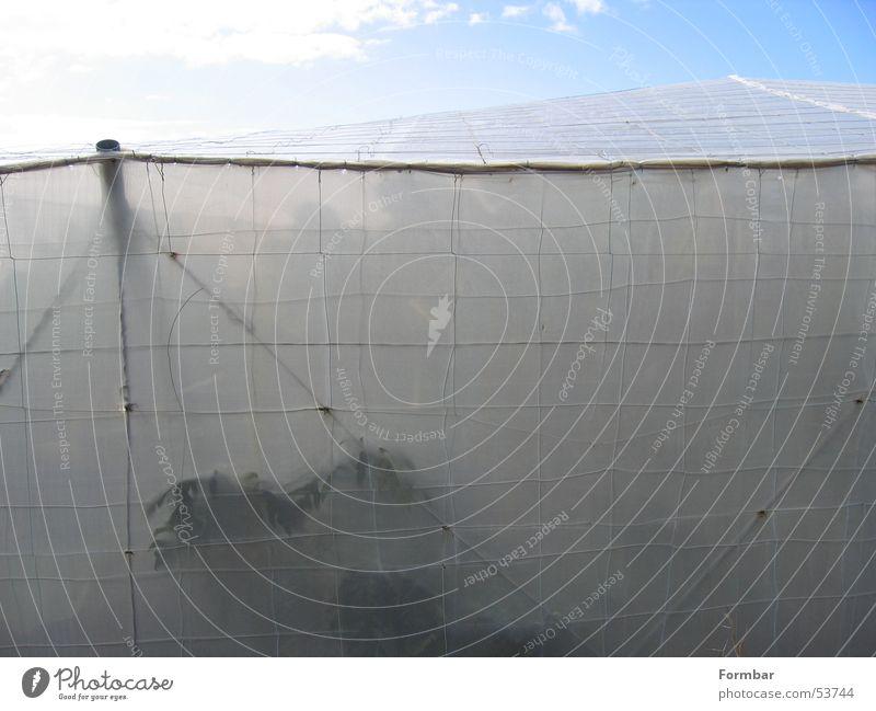hinter Stoff Zelt Banane Bananenplantage Meer Wolken Plantage Gitter Wasser