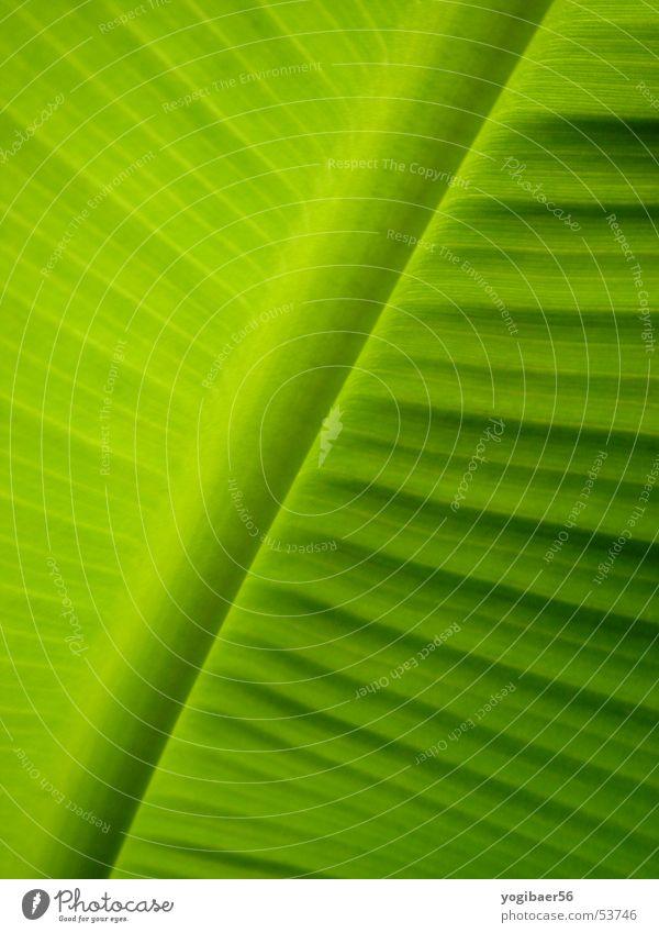 Pflanzenblatt Blatt grün Natur Strukturen & Formen