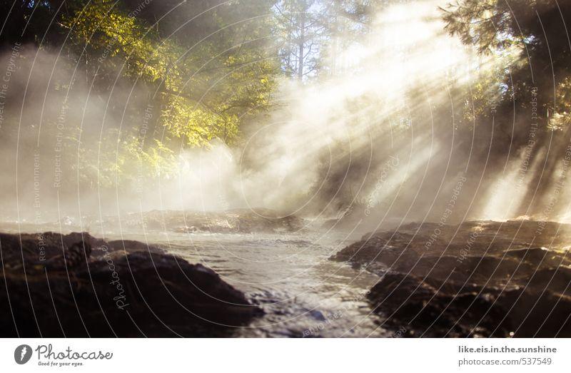 heiße quelle....herrlich :) Natur Ferien & Urlaub & Reisen Wasser Pflanze Baum Erholung Einsamkeit Landschaft ruhig Wald Umwelt Schwimmen & Baden Stein