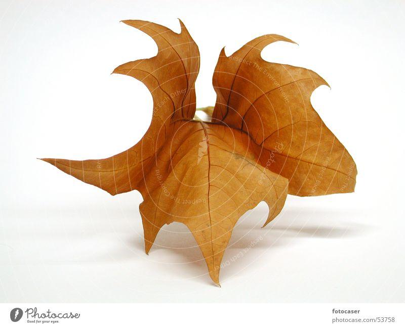 Herbstblatt Blatt braun Symmetrie Herbstlaub