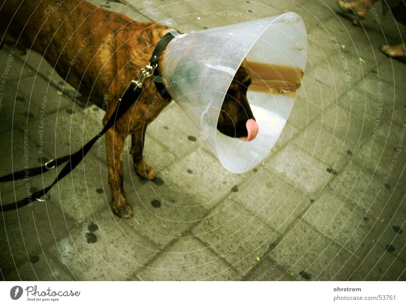 armer koeter Hund Trichter
