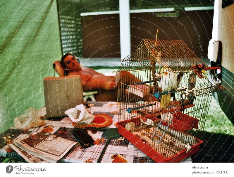 kanariencamper bequem Wohnmobil Fink Campingplatz Kanarienvogel
