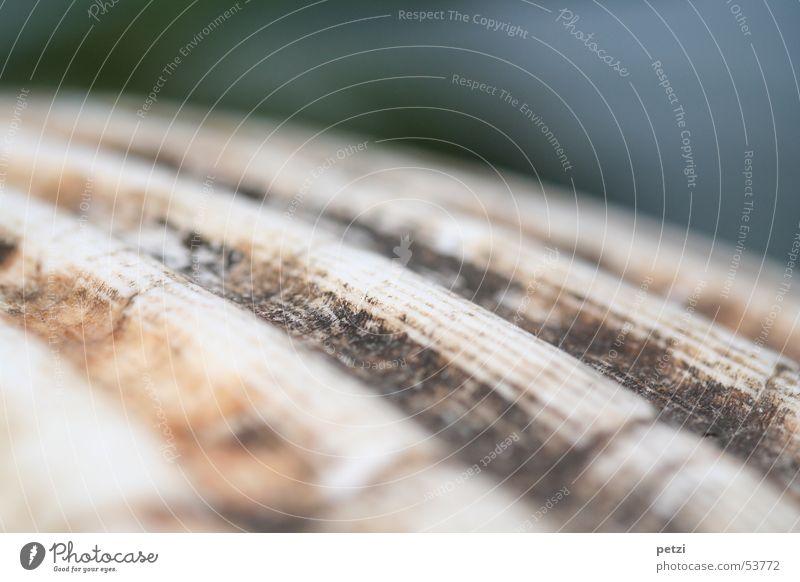 Jakobsmuschel weiß grau braun Hintergrundbild Muschel Furche Schalen & Schüsseln Oberfläche Ostreoida