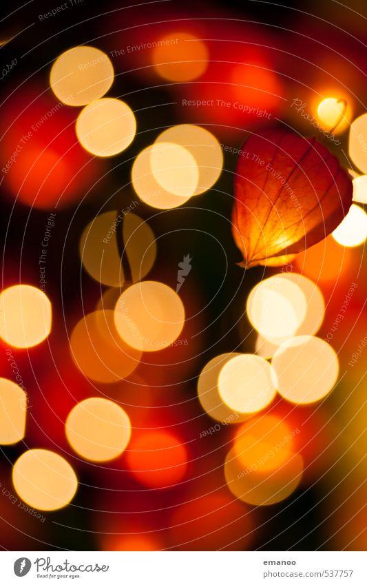Lampionblumenlicht Natur Feuer Pflanze Blume Sträucher Blüte Topfpflanze exotisch Dekoration & Verzierung Kerze Kitsch Krimskrams Kugel leuchten dunkel hell