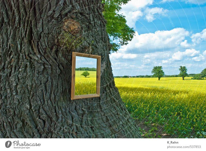 Spiegel der Natur. Himmel blau schön Pflanze Sommer Baum Erholung Landschaft ruhig Wolken gelb Frühling Gesundheit Feld wandern