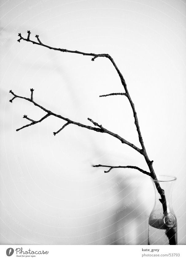 zweig Natur weiß Baum Winter schwarz Sträucher Ast Zweig