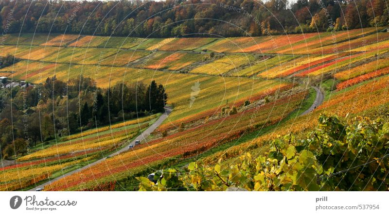 autumn vineyard scenery grün Baum Landschaft Blatt Wald gelb Herbst braun Deutschland Feld Idylle Sträucher Hügel Wein Landwirtschaft Ackerbau