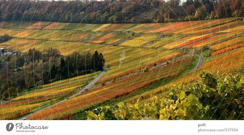 autumn vineyard scenery Landwirtschaft Forstwirtschaft Landschaft Herbst Baum Sträucher Blatt Feld Wald Hügel braun gelb grün Idylle Weinbau kochertal orange