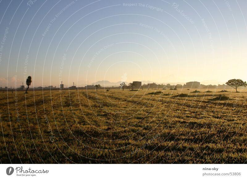 sonnenmorgen Sonnenaufgang Baum Wiese Nebel Haus Mallorca Wolken braun Gras Sträucher Himmel Landschaft campos blau Stimmung