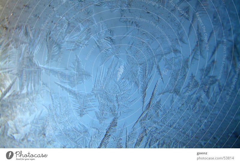 Berlin ist zugefroren Eiskristall frieren Eisblumen kalt Winter Kristallstrukturen Fensterscheibe Wasser Stern (Symbol) Frost