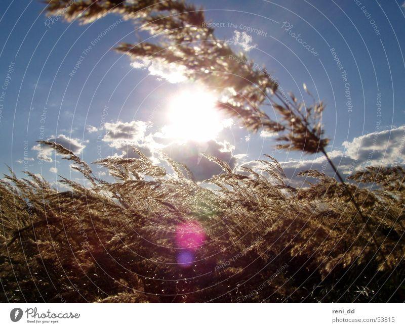 Lichtblick Himmel Sonne Wolken Gras Bewegung Freiheit Luft Wind Korn Kornfeld