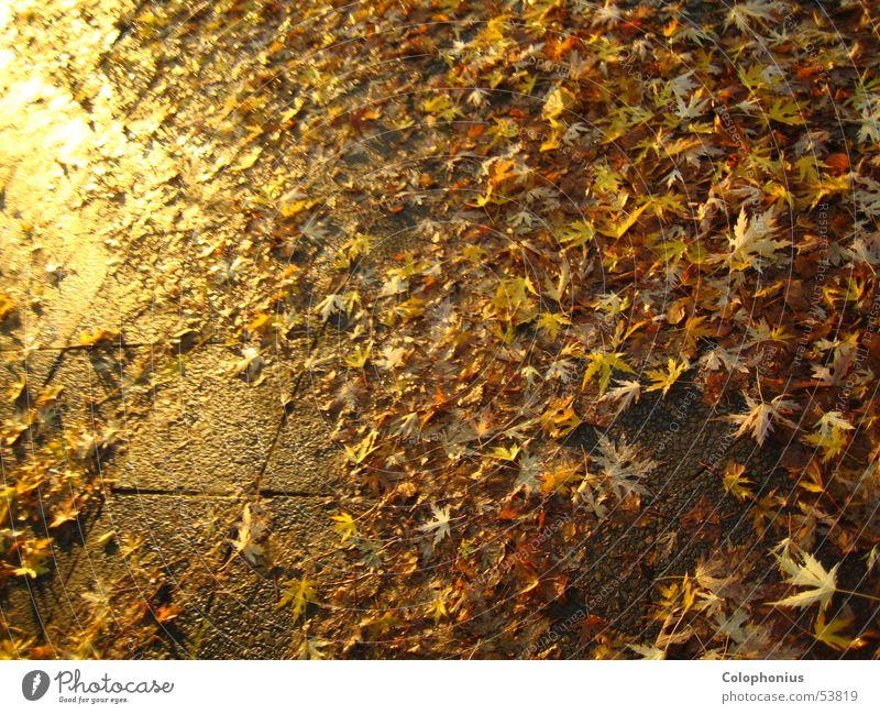 Goldrausch Bürgersteig nass feucht erleuchten Blatt Vergänglichkeit Verfall Haufen Licht gelb Physik glänzend Sonnenuntergang Herbst Reichtum Kostbarkeit braun