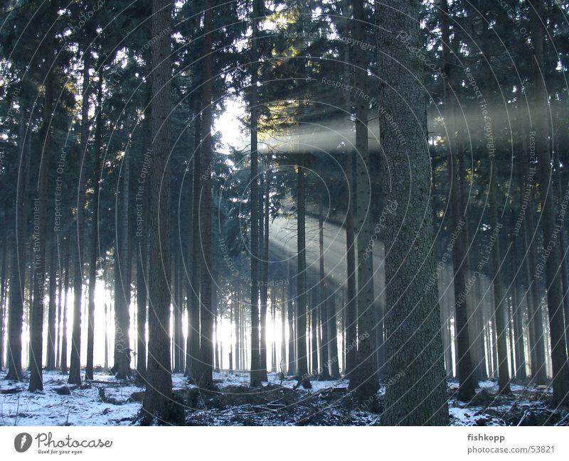winterlicht Wald Licht Lichteinfall Sonnenstrahlen Waldlichtung Märchenwald Winter Waldspaziergang Lichtstrahl Schnee