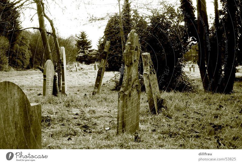 Graveyard Baum ruhig Einsamkeit Wiese Tod Religion & Glaube Rücken Trauer Rasen Stillleben Geister u. Gespenster England Gott Friedhof Götter Grab