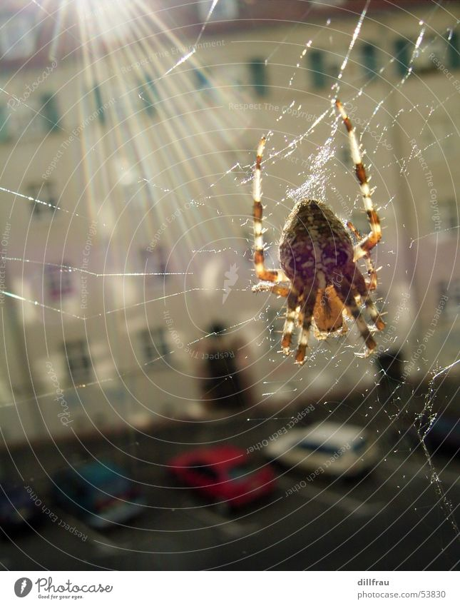 Mein Fenster Natur Sonne Sommer Haus Tier braun Angst glänzend Netz Insekt gruselig Strahlung Leipzig Ekel Spinne