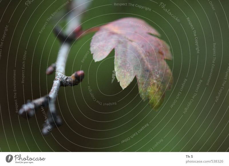 Blatt Natur Pflanze Blatt Umwelt Herbst natürlich ästhetisch harmonisch