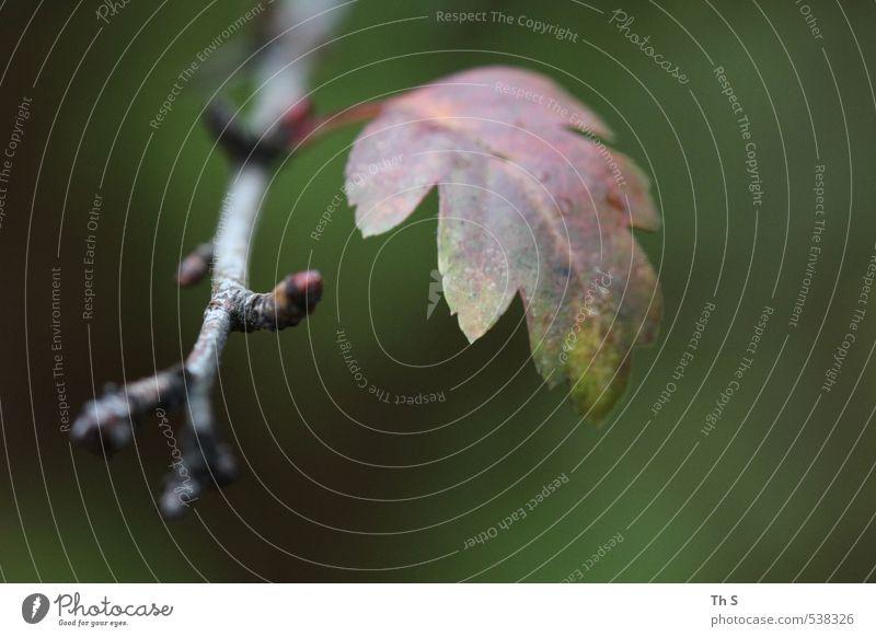 Blatt Natur Pflanze Umwelt Herbst natürlich ästhetisch harmonisch