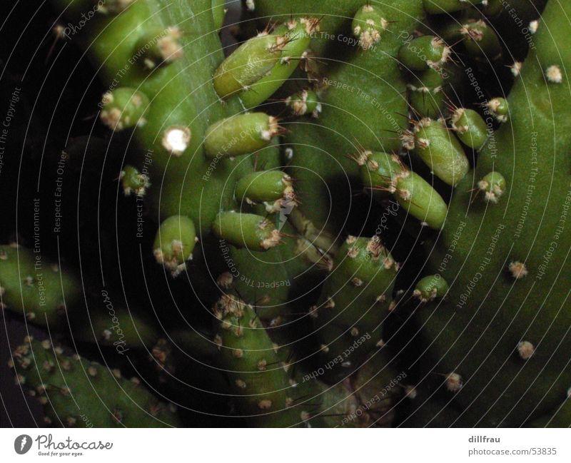 Auswuechse Sonne grün Sommer Wärme Sand Erde nah Wüste Physik Kaktus Stachel Blumentopf Sukkulenten