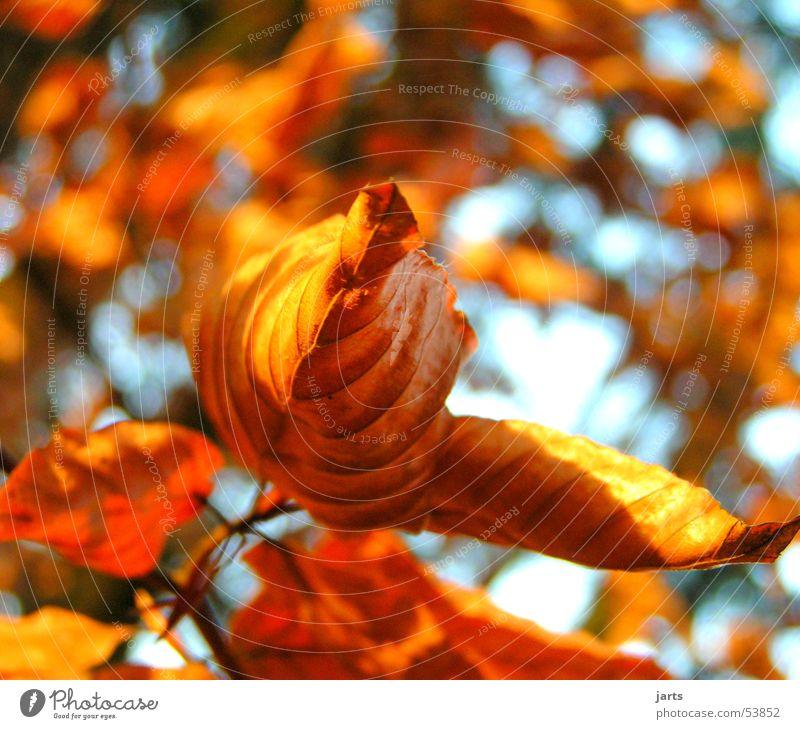 Winterlaub Baum rot Blatt Wald braun
