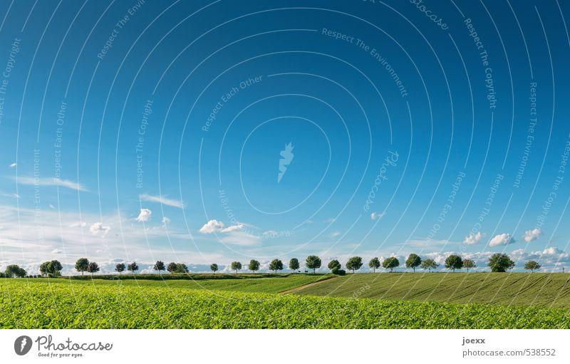 Stillgestanden Natur Landschaft Himmel Wolken Horizont Sommer Baum Feld natürlich blau grün weiß Idylle Umwelt Ferne ländlich Farbfoto Außenaufnahme