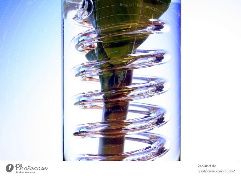 Kringelvase 1 Pflanze Blatt Glas Kreis Stengel Spirale Vase