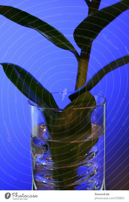 Kringelvase 2 Pflanze Blatt Glas Kreis Stengel Spirale Vase