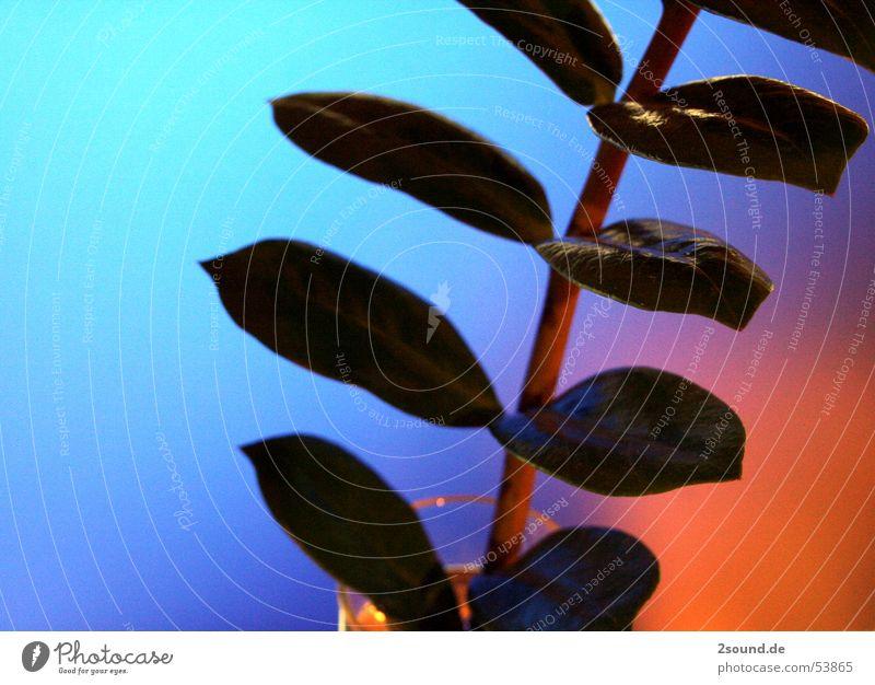 Komische Pflanze 1 blau Blatt Stengel