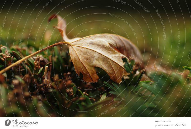Trash 2013 | wär hätte es gedacht.... Umwelt Natur Pflanze Herbst Sträucher Blatt Grünpflanze Wildpflanze Hecke alt dünn authentisch einfach natürlich trashig