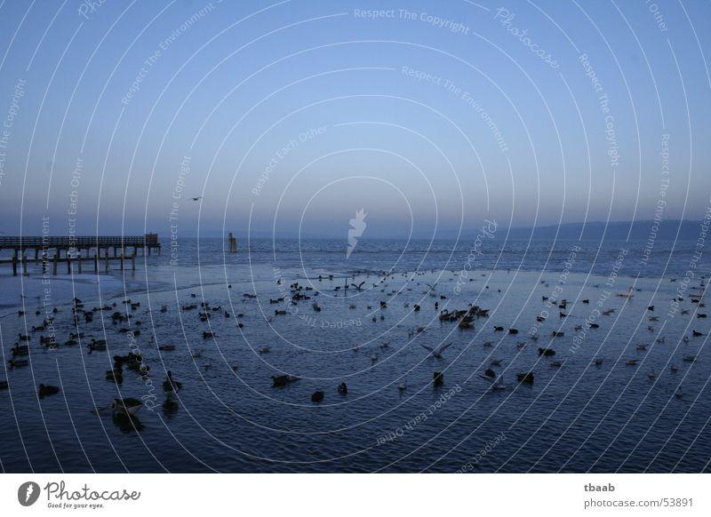 abends am see Sonnenuntergang See Vogel Gans Schwan Steg möven Ente Wasser blau fliegen Im Wasser treiben Schwimmen & Baden