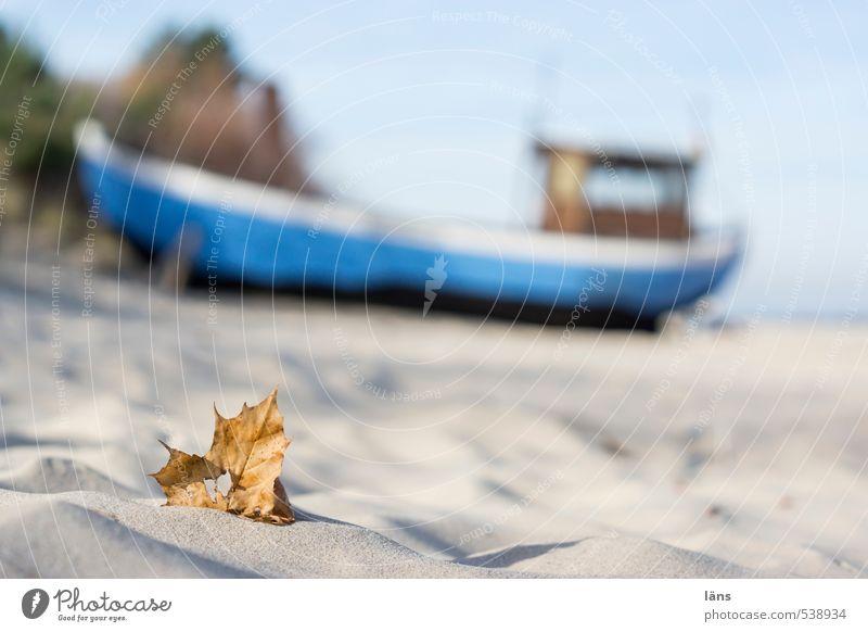 strandgut Strand Blatt Schiff Fischerboot Herbst Ostsee Fischerei