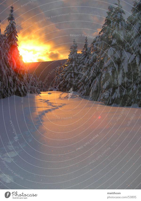 Wintersonne Wolken Wald Schnee Tanne