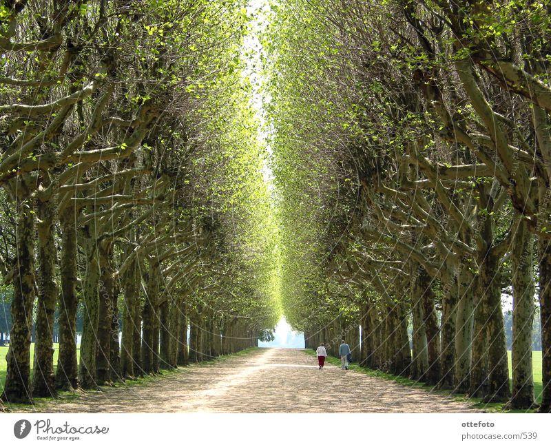 Allee in Meudon bei Paris Mensch Baum ruhig Erholung Frühling Paar Wege & Pfade Park paarweise Frankreich Straße