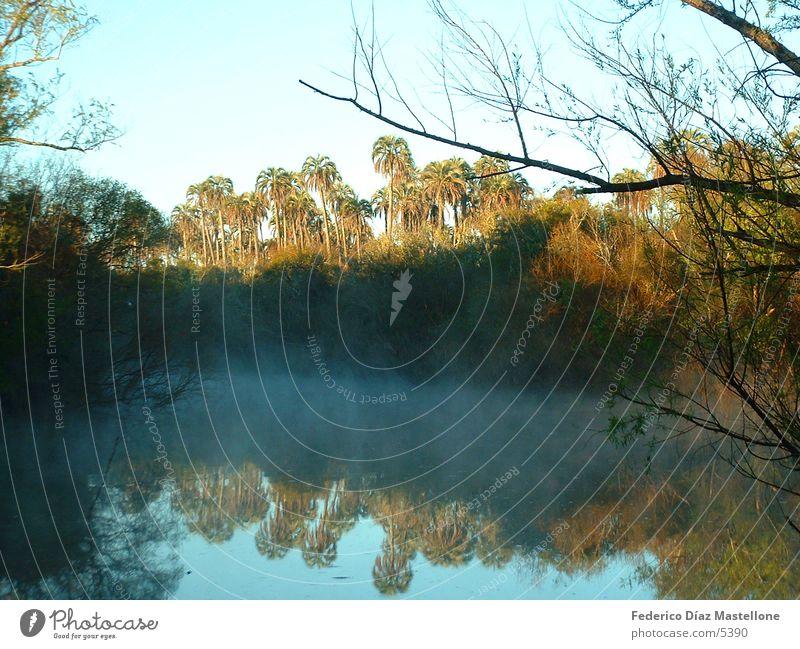 Palmar Palme Park Sonnenaufgang Bach Argentinien Wasser Natur Reflexion & Spiegelung Fluss
