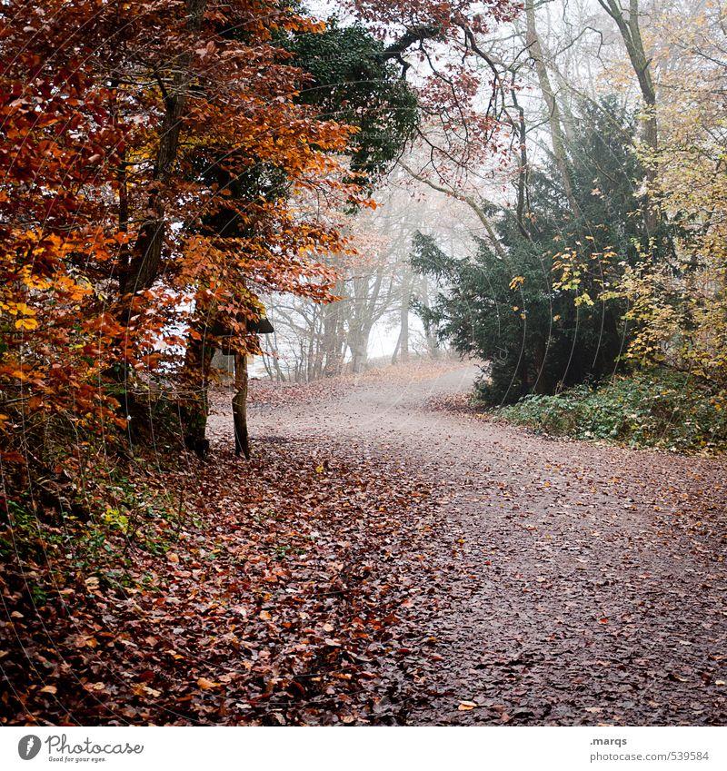 Hinaus Freizeit & Hobby Ausflug wandern Umwelt Natur Landschaft Pflanze Herbst Klima Klimawandel Nebel Baum Wald Blatt Mischwald Wege & Pfade verblüht einfach
