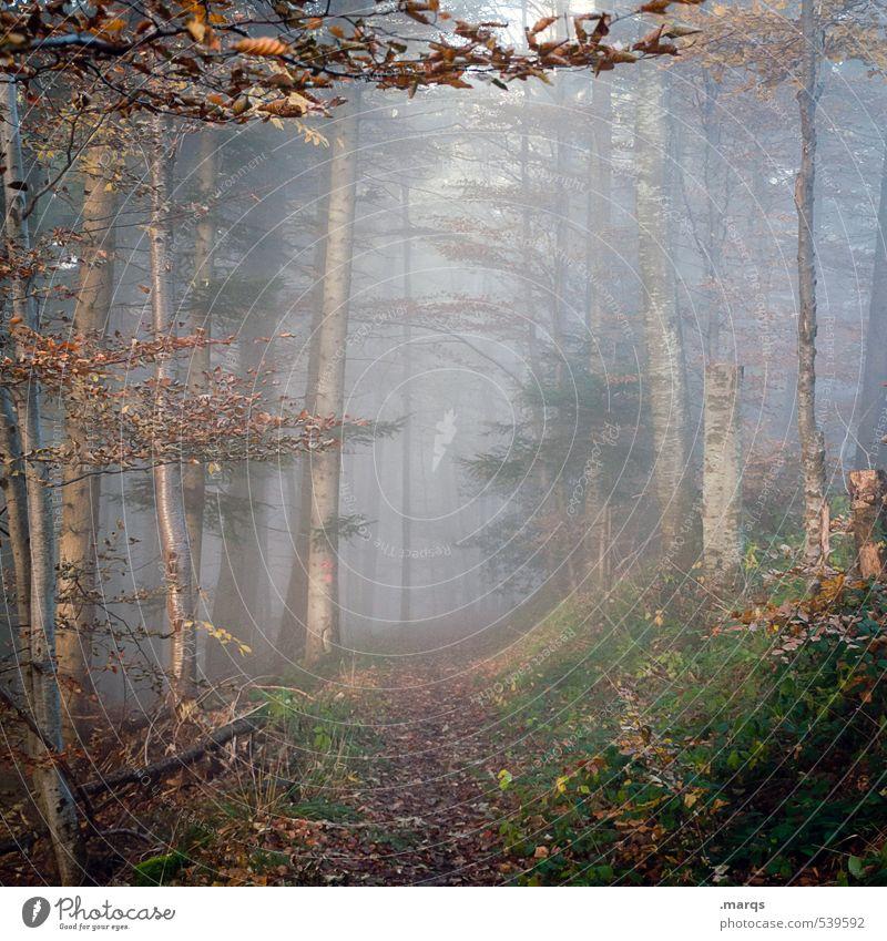 Hinein Natur schön Landschaft Blatt Wald Umwelt Herbst Wege & Pfade Stimmung Freizeit & Hobby Nebel Klima Ausflug Beginn Zukunft einfach