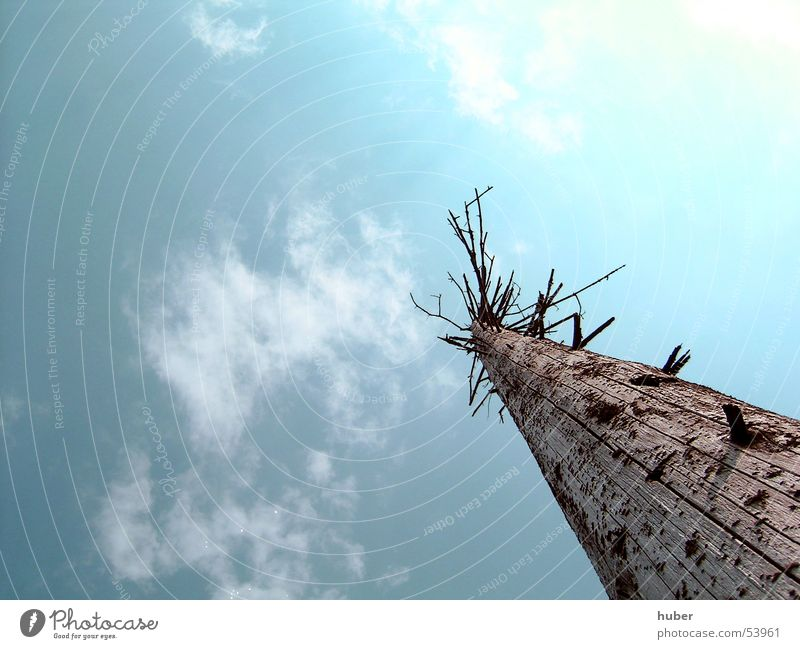 Baumstamm von unten kaputt Naturschutzgebiet Lotharpfad Wolken Himmel Tod türkies Ast
