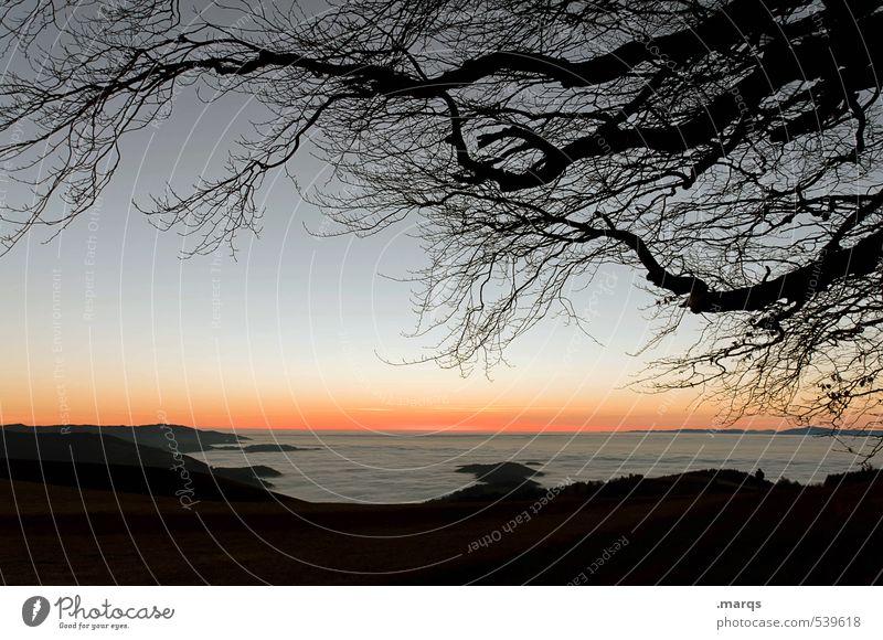Am Wolkenmeer elegant Ausflug Ferne Freiheit Natur Landschaft Wolkenloser Himmel Horizont Herbst Klima Schönes Wetter Nebel Ast Hügel Erholung dunkel Kitsch