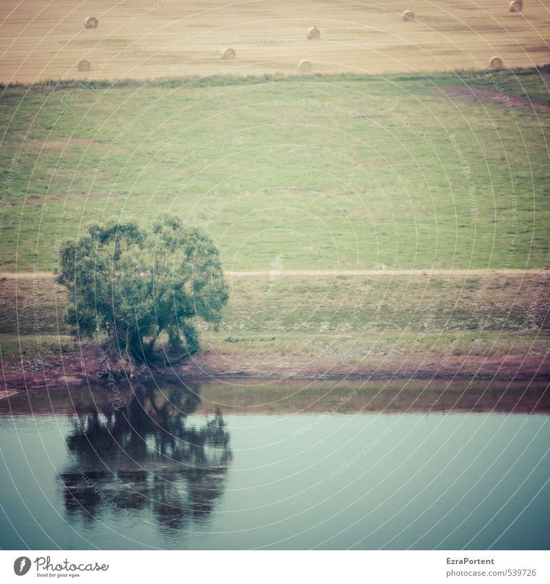Elbe Natur Ferien & Urlaub & Reisen blau grün Wasser Pflanze Sommer Baum Landschaft gelb Umwelt Wiese Wege & Pfade Gras Stimmung braun