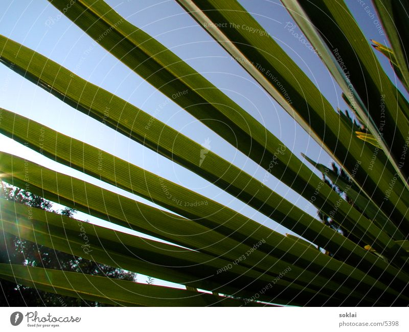 Palmen Perspektive grün Sommer Stil Natur Sonne